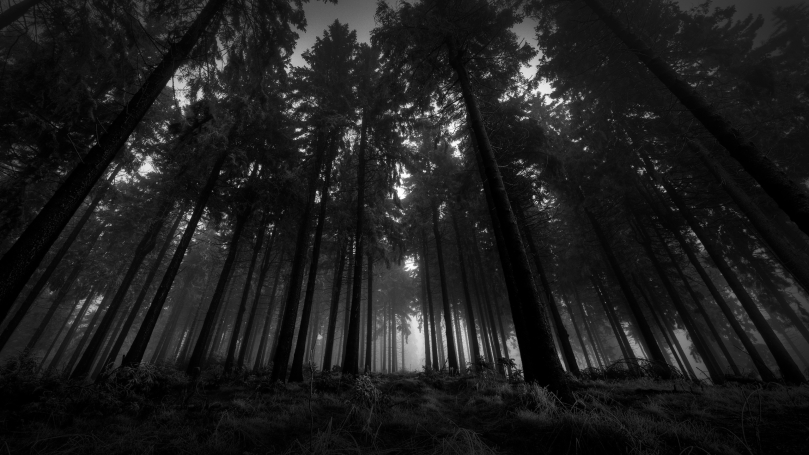 Dark-Forest-Awesome-Wallpaper