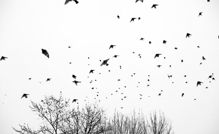 Birds_w-1140x700