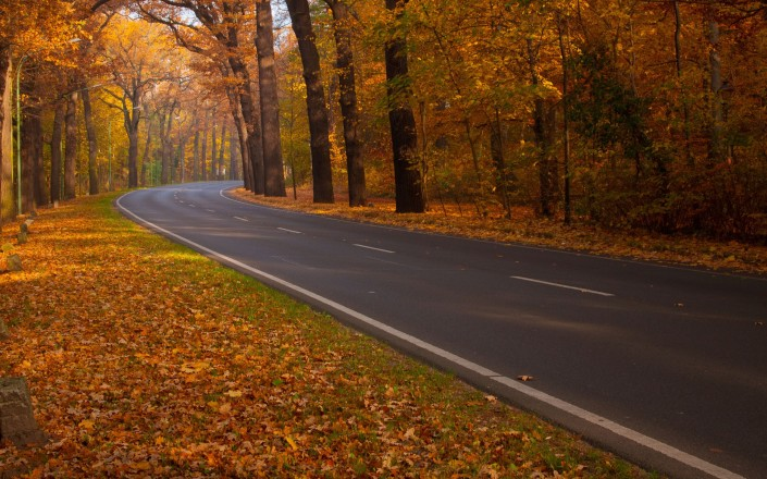 fallen-leaves-roads-trees-1736781-2560x1600