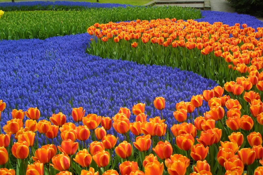 Keukenhof, na Holanda | Crédito: Lin Mei/Flickr/Creative Commons