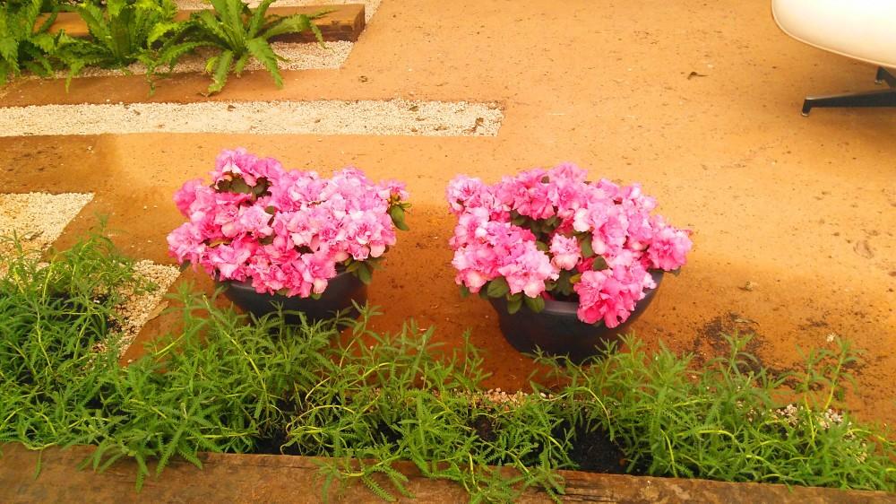 Flores, cores e amores na Expoflora de Holambra (SP) | Crédito: Camila Honorato