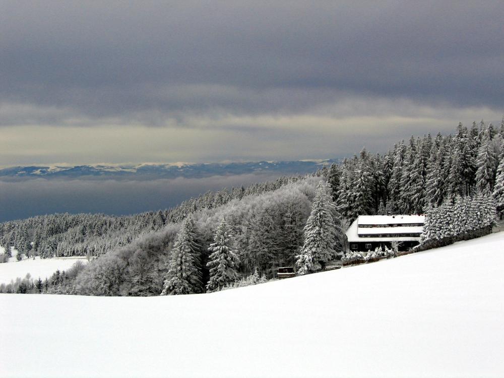 Detalhes da Floresta Negra alemã nevada. Há o que esplorar esse ano... / Crédito: Richardfabi/Wikimedia Commons